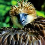 Philippine Eagle Foundation